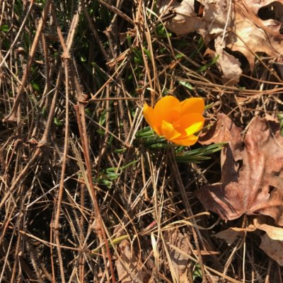 Signs of Spring at Quarter Moon Farm
